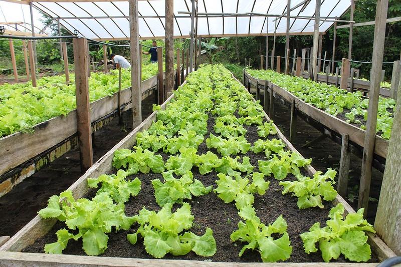 Alcoa apoia projeto de empreendedorismo rural da juventude em Juruti