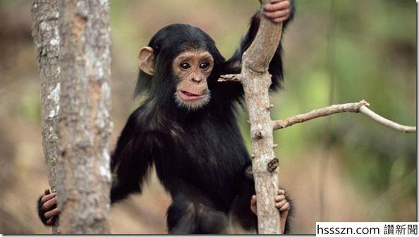 Monkey_thumb_594_336