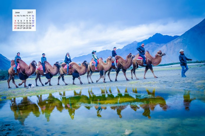 Free June 2017 calendar with Double Humped Bactrian camels Nubra Valley Ladakh