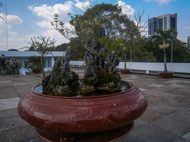 Bonsai On The Roof