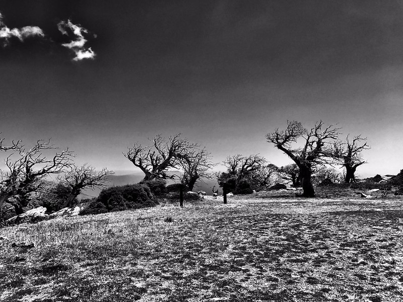 dead trees on mountain plateau on mount ochi in greece black and white