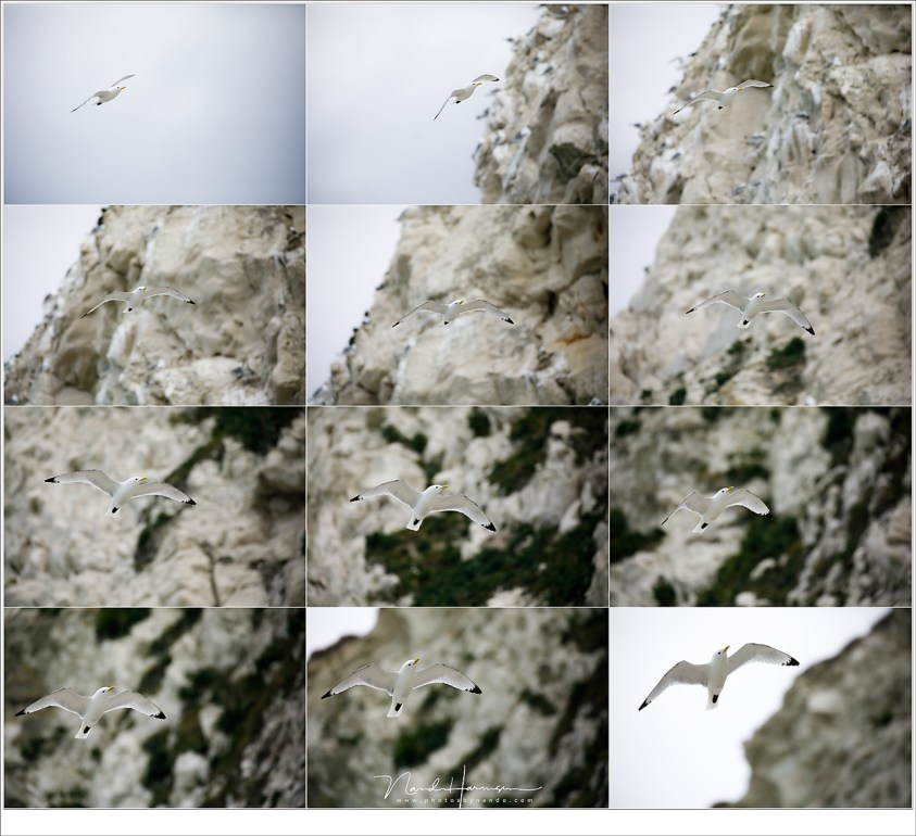 Een Drieteenmeeuw in vlucht; de AF blijft op de vogel vastkleven ondanks de achtergrond. (EF100-400L II @ 400mm - ISO400 - f/5,6 - t=1/5000sec)