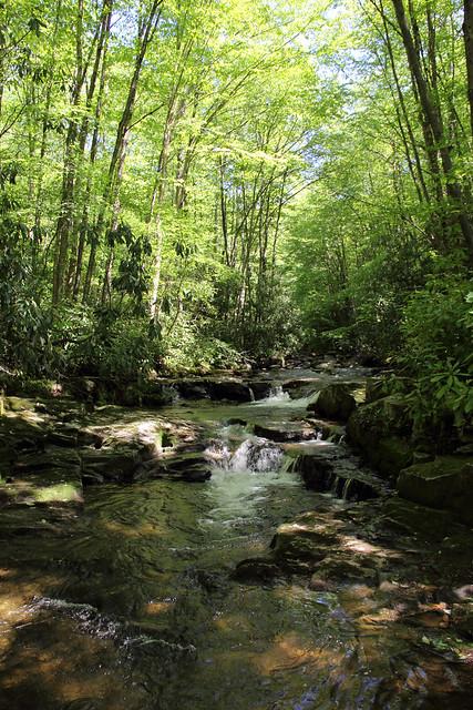 20170603_Tea_Creek_Wilderness_034