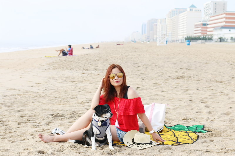 bowtie-red-white-blue-dog-outfit-beach-10