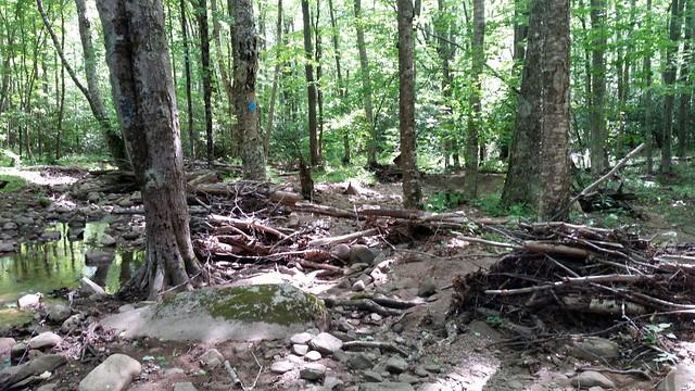 20170603_Tea_Creek_Wilderness_053
