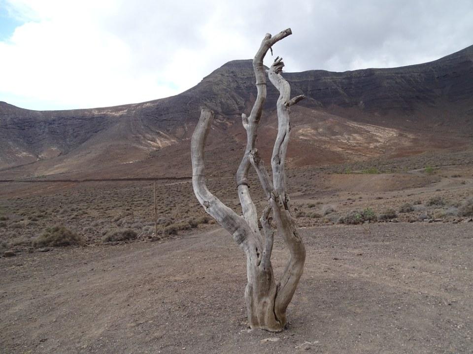 Gran Valle Flora y Fauna Isla de Fuerteventura 12