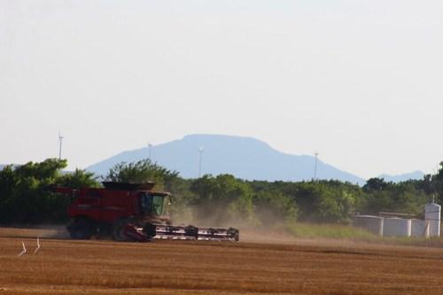 Gorgeous harvest backdrop.