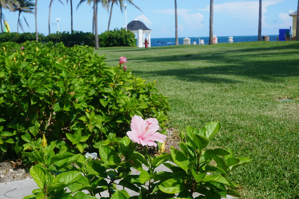 grand lucayan resort garden