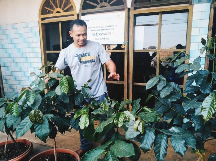 Rumah Pengolahan Kopi Pasirwangi Garut Arif Sonjaya