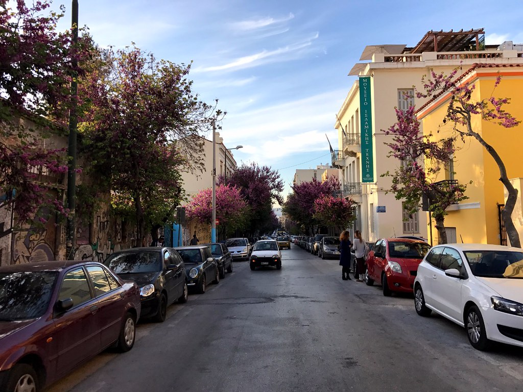 pink flower trees in a street in athens