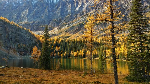 Golden larches at Taylor Lake
