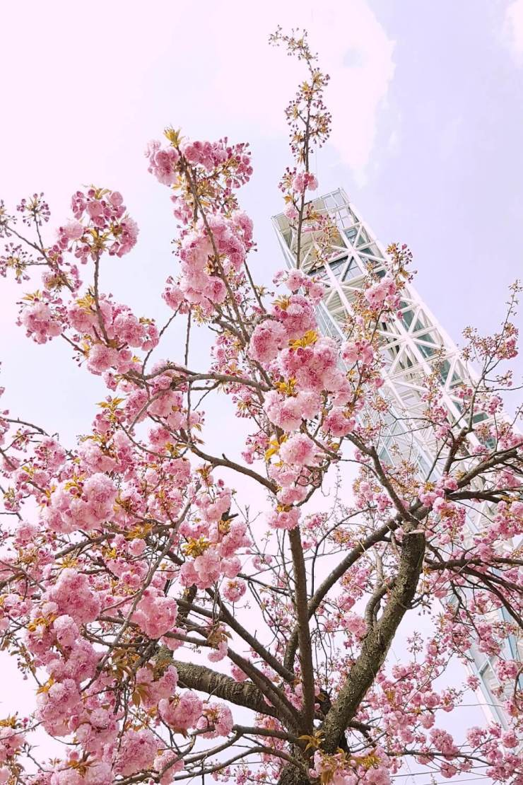 gapyeong day tour in spring