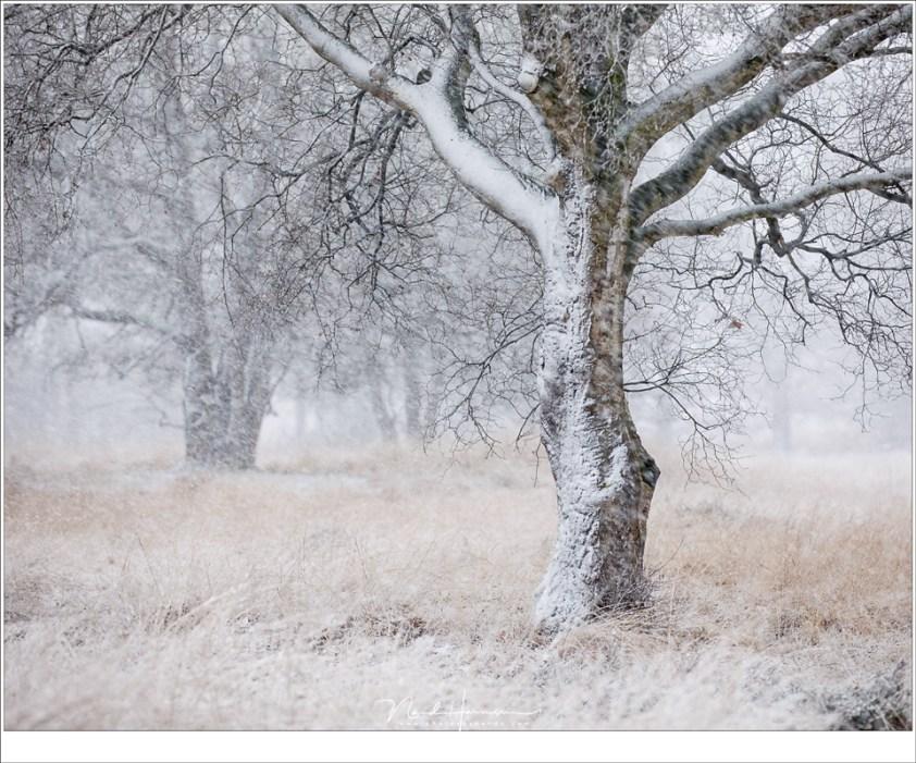Een berk in een sneeuw (142mm | ISO400 | f/3,5 | 1/125)