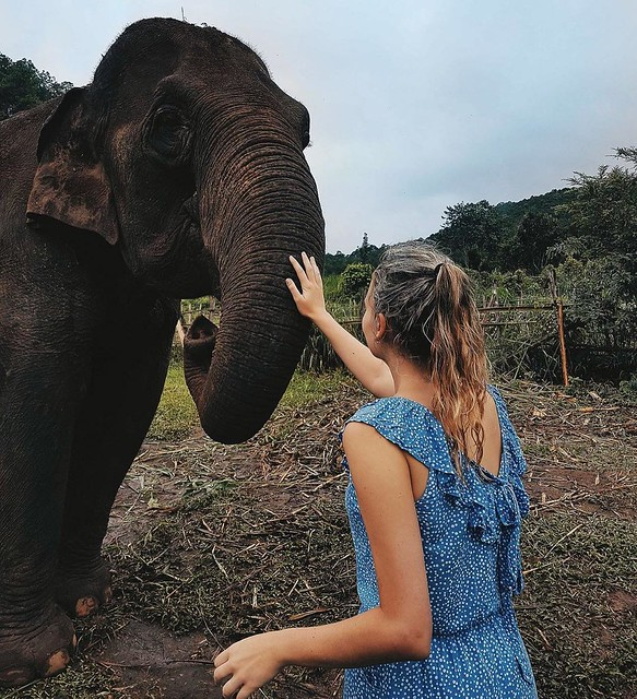 15 Facts About Chiang Mai - Elephant Sanctuary