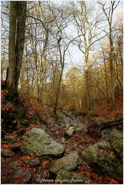 Het licht is mooi De natte stenen zijn bedekt met bladeren.