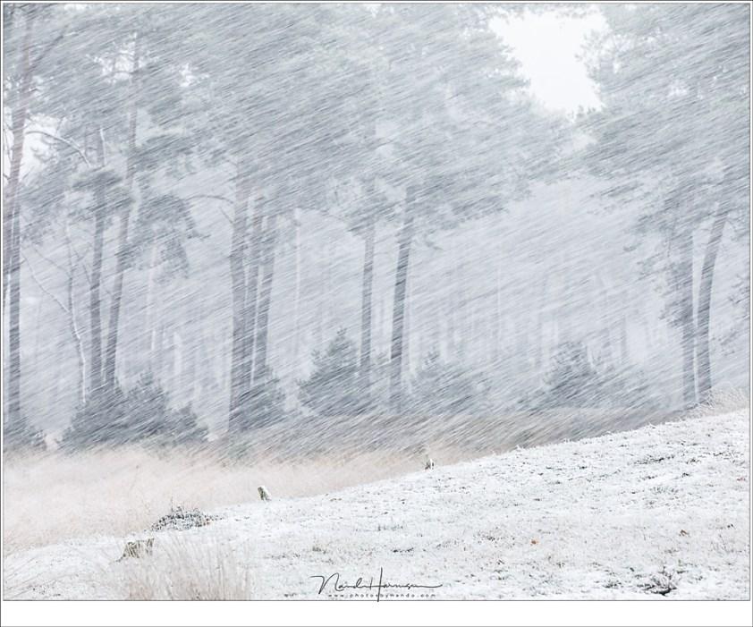 Sneeuw en wind... (135mm | ISO400 | f/7,1 | 1/25)