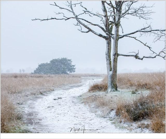 Langzaam wordt het landschap wit. Als het maar lang genoeg blijft sneeuwen (75mm | ISO400 | f/5,6 | 1/100)