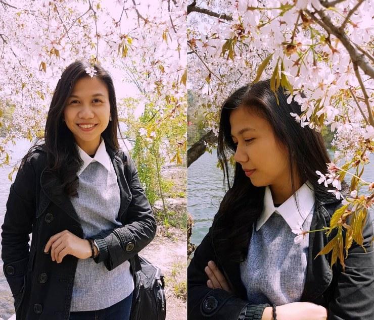 cherry blossom trees in namisom