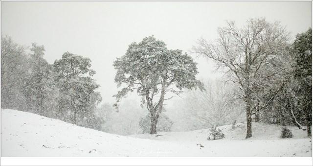 Het beeld dat ik al in gedachten had voordat er sneeuw lag. (70mm | ISO800 | f/2,8 | 1/3200)