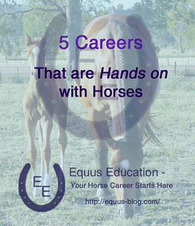 5 Careers that are Hands on with Horses | Equus Education