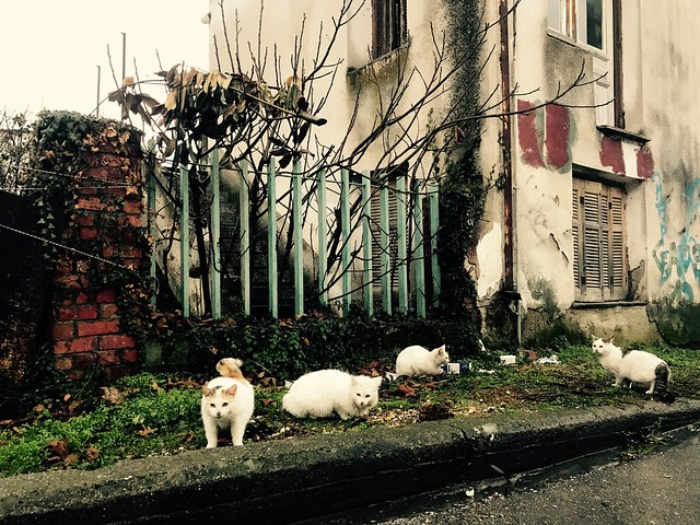 cats in kalampaka streets in meteora