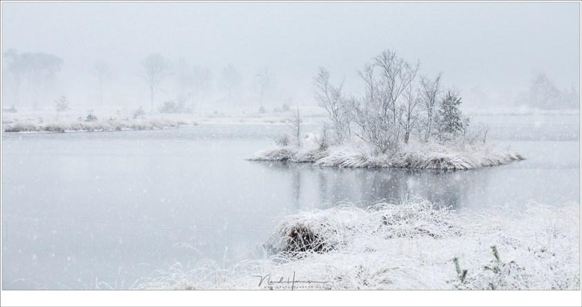 Mijn favoriete foto van deze middag op de Kampina; het eiland in het Kogelvangersven, een waar winter wonder land