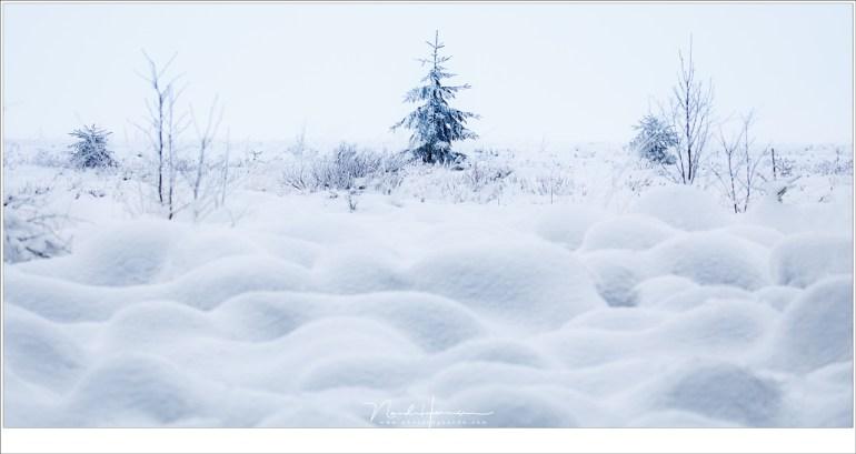 Golven van sneeuw... het lijkt een zee, bewegingsloos, stil, sereen.