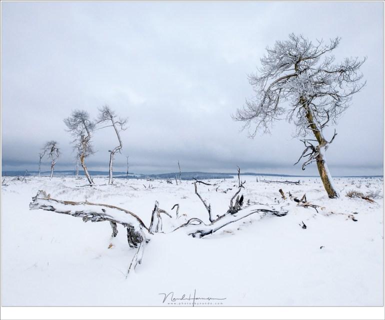 Het lot van deze bomen ligt verborgen onder de sneeuw; afgebroken takken en omgevallen stammen.