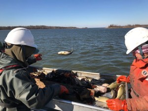 Photo of biologists conducting the annual winter trawl survey
