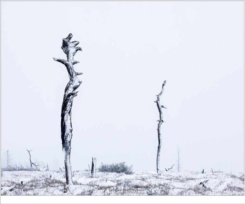 De sneeuw, de vormen, het egale licht... het levert bijna abstracte beelden op.
