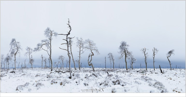 In een vreemd licht, met wolken vol met sneeuw om ons heen, staan de roerloze bomen van Noir Flohay