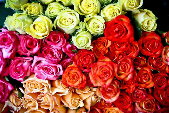 rose day 2019 expected price