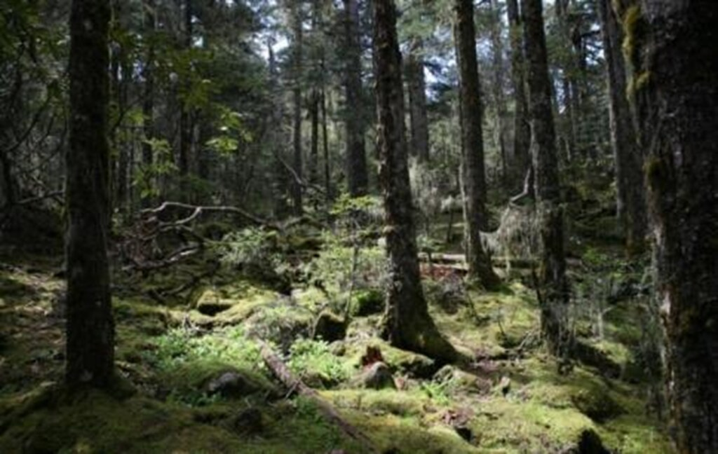 過去三江併流世界自然遺產地區的公共管理缺失引起亂砍濫伐,造成公地山林危機