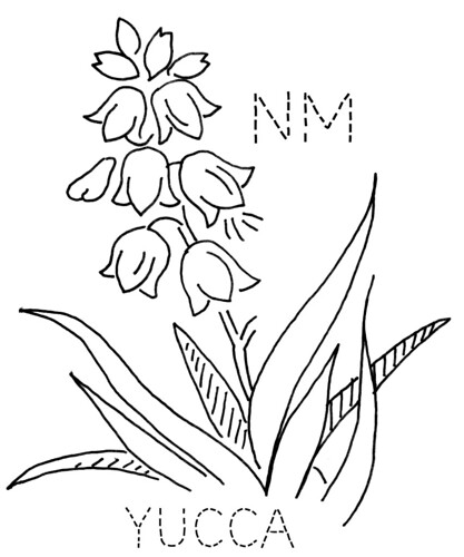 New Mexico Yucca To Download The 6 Inch Block Size