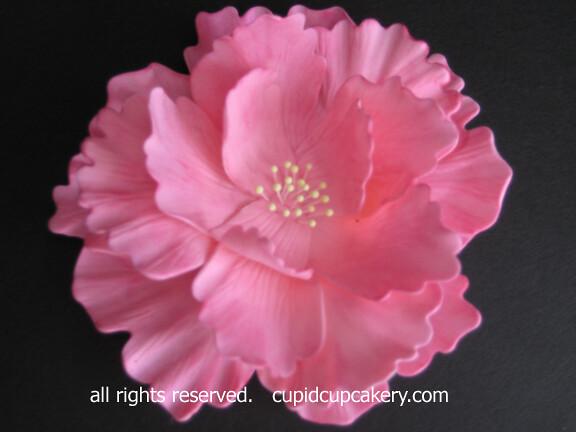 Sugarpaste Flowers Flickr