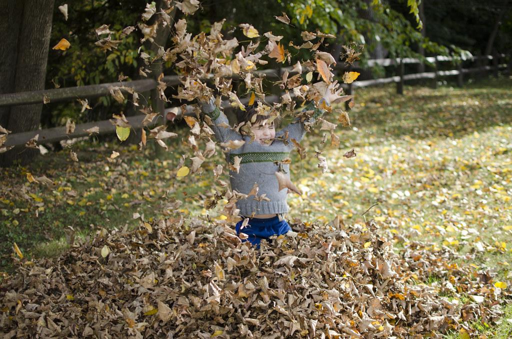 short story fall leaves 2