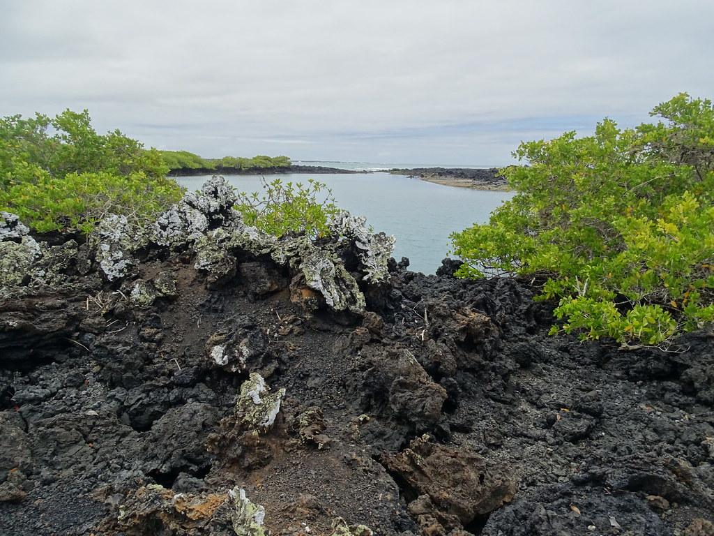 Paisaje Islote Tintoreras Isla Isabela Parque Nacional Galapagos Ecuador 03