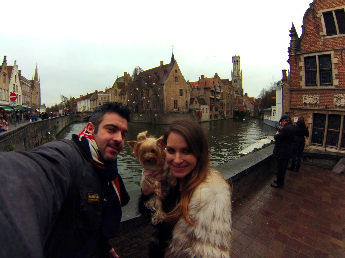 Viajar con Mascota mascotas - 30904888976 c9d5c883ec o - Cómo viajar con perros y mascotas