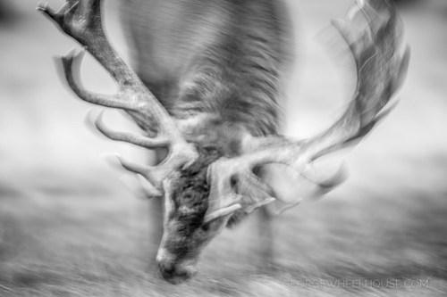 Red Deer Battle Armour