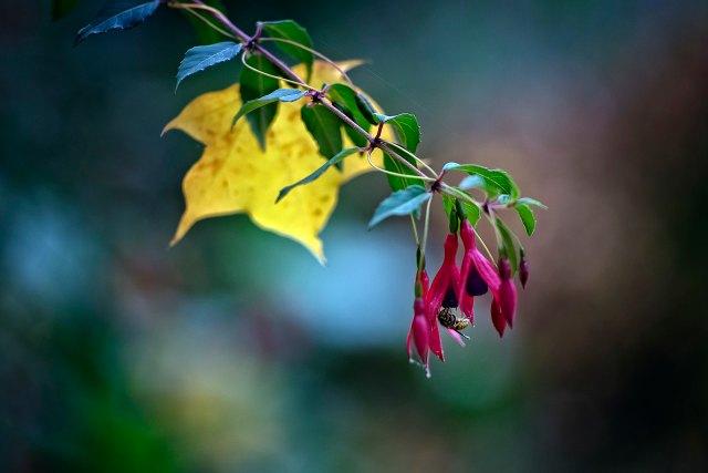 Hanging Nectar