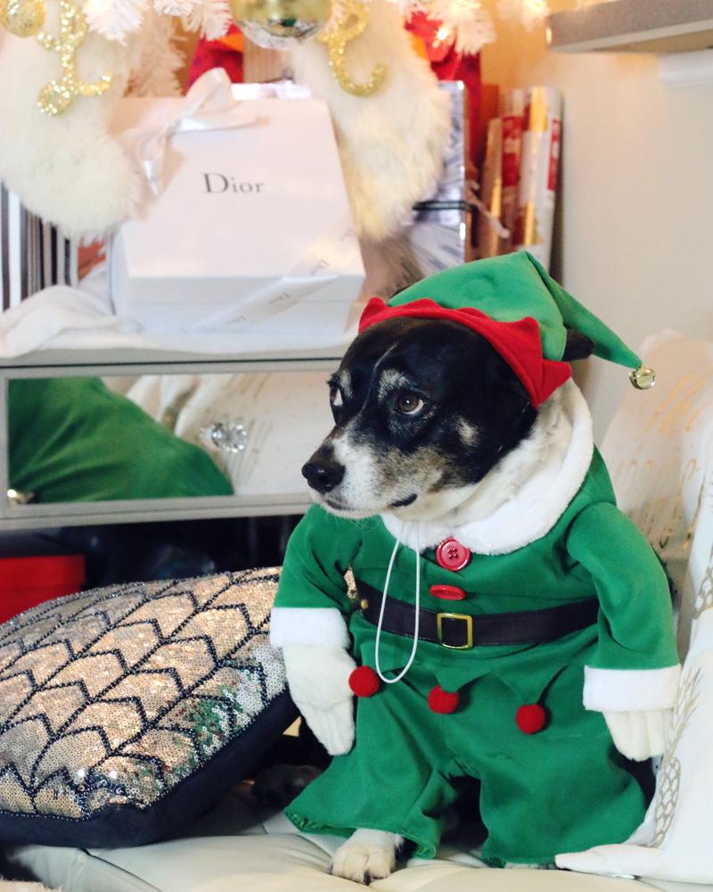 louis-dog-elf-2