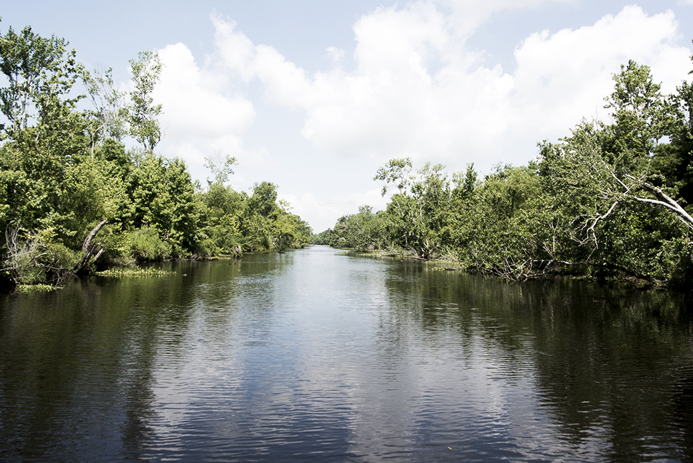bayou-new-orleans-swamp-tour-water