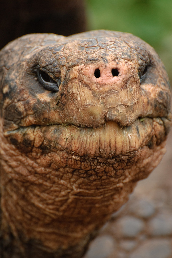 Tortoise Face Oliver Dodd Flickr