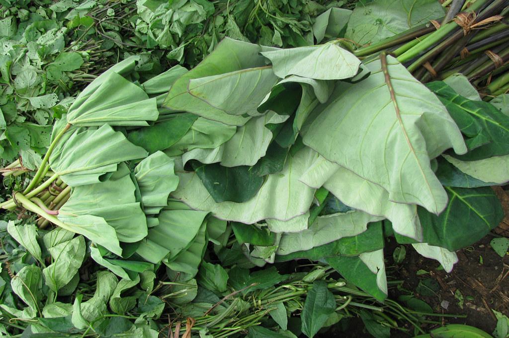 Tropical Plants Sale