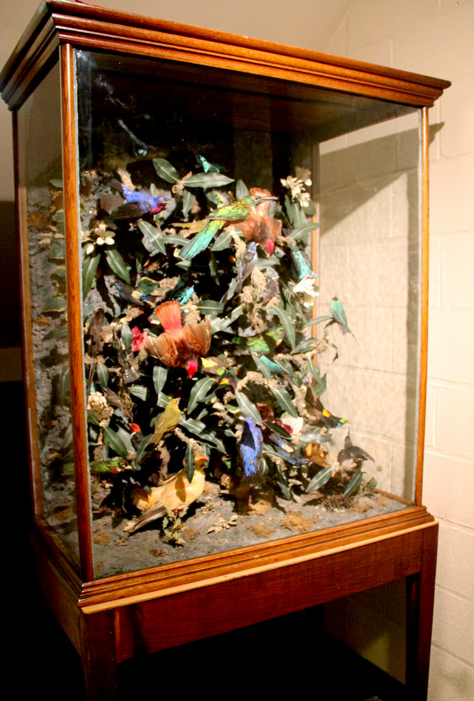 Victorian Taxidermy Bird Display In The Quot Antique Cabinet