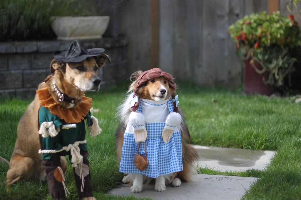 Dog Coustumes