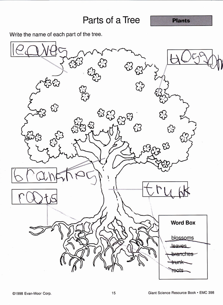 what are different parts tree