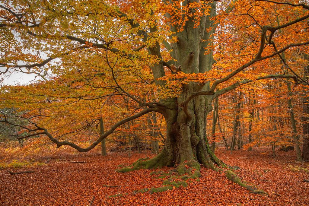 Herbst Im Reinhardswald Im Urwald Im Reinhardswald