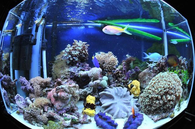 サンゴ水槽1