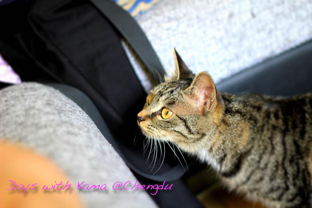 2-1603 Pics 20110730-2.jpg